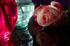 Rose 50 + 8 : ask perfection of an imperfect world
