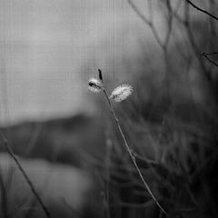spring beckons