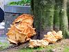 Castle Mushroom (Kretzschmaria deusta)