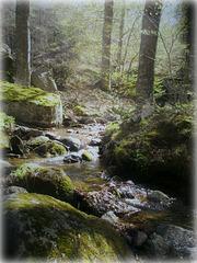L'eau vive / Living water [ON EXPLORE]