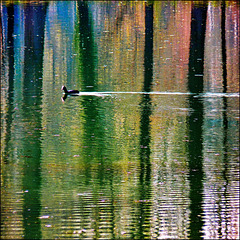 Colours and reflections - SPC 4/2017 - 1° place -  Riflessi sul lago - (634)