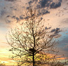 1 (35)..austria tree baum autumn with sundown