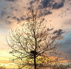 1 (35)..austria tree baum autumn with sundown