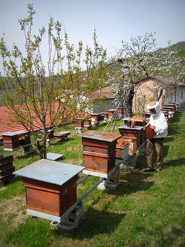 fattoria Bronzetta - apicultura