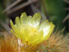 Floro de la kakto
