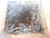 DSCN4536 - abelha mandaçaia Melipona quadrifasciata quadrifasciata, Meliponini Apidae Hymenoptera