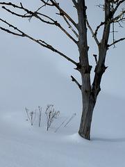 Baumleiche im weißen Tuch