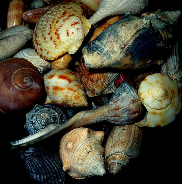 She sells seashells on the seashore.