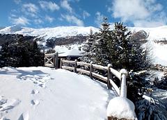 winter fence