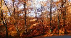 Borgosesia ,fraz, Bastia . Il bosco rosso1