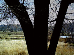 Marsh, Lost River