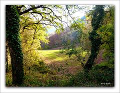 En un claro del bosque