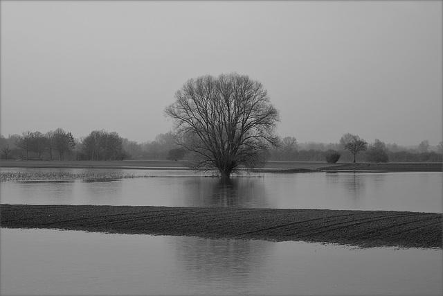 Überschwemmung der Rheinwiesen