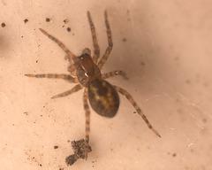 SpiderIMG 1633