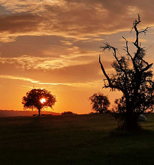 ...jeden Morgen geht die Sonne auf...