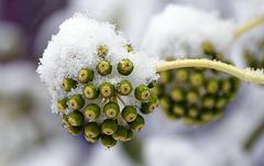Connaissez vous cette plante ? ... Do you know this plant?