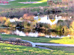 Overflow Pond.