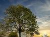 1 (51)..tree baum...frühling spring