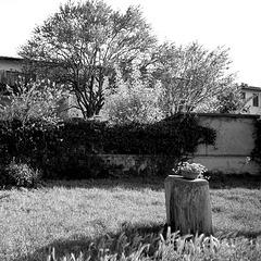 Spring gardens in black and white (PIP)