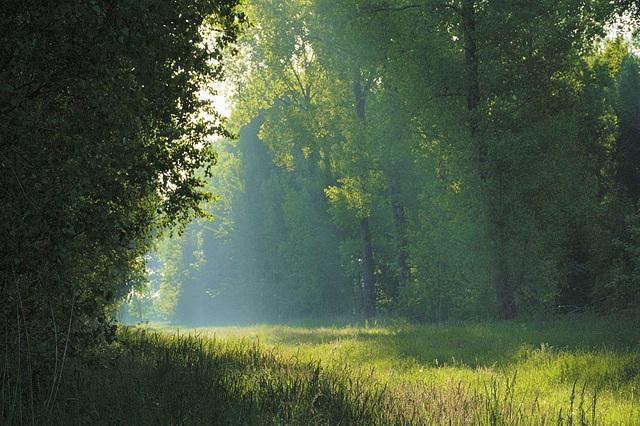 Juste après la pluie la prairie fume !
