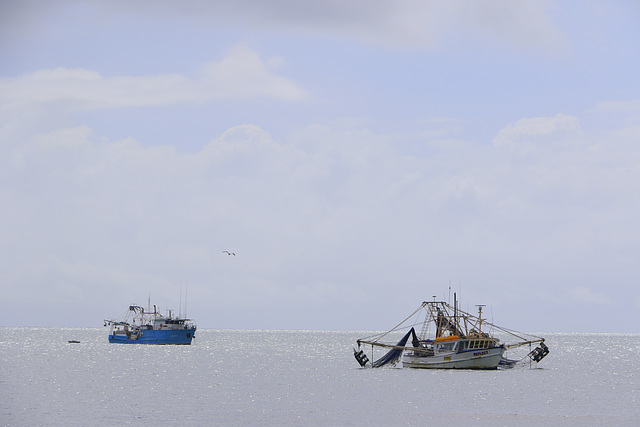 Shrimp Trawlers