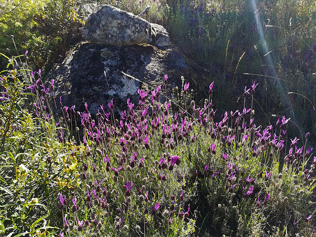 Spanish lavender, granite and sunbeam! :o) for Marie-claire!