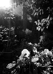 light at play in the garden