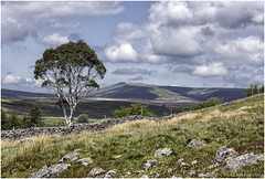 The Tree and the Beacons