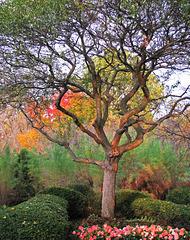 The Tree in Autumn