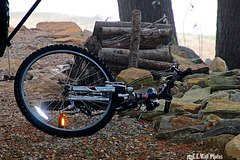 Flashy Bike Lost in the Woods