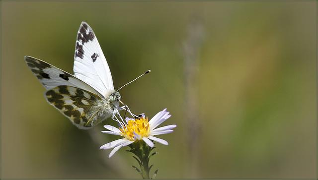 fil(et) à papillons - Page 10 43089540.d8ecee81.640