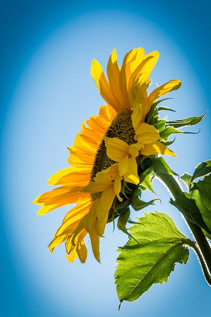Sonne im Garten ...