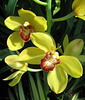 More Orchid Beauty