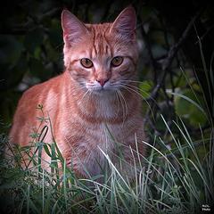 Incroyable beauté.. à regarder en grand pour les zamoureux des chats