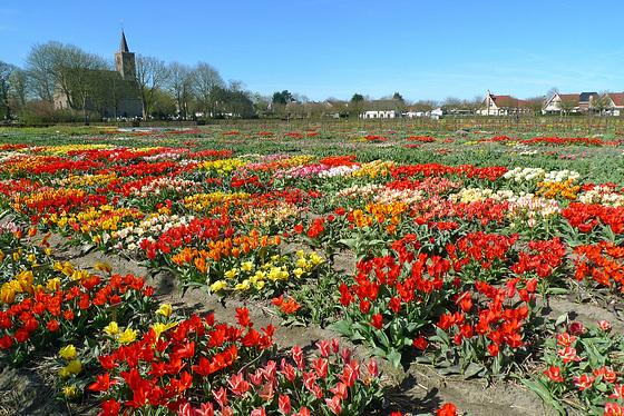 Nederland – Limmen, Hortus Bulborum