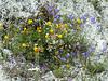 Joli bouquet alpin