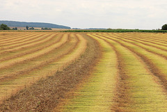 Gisements de lin en Picardie