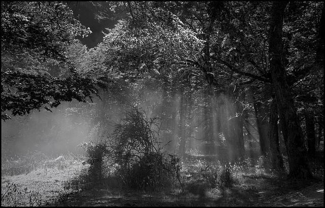light_rain