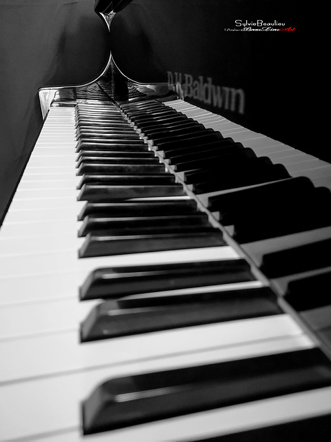Pianissimo II IMG120131