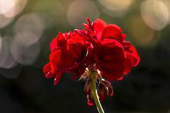 flor con bokeh potente