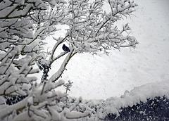 Snow Bird!