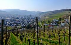 Blick aus den Weinbergen auf Ahrweiler