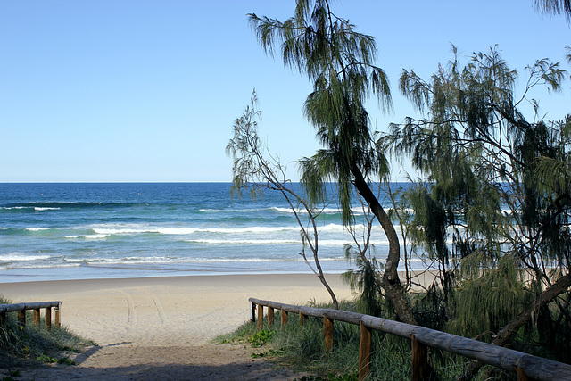 114/365  Beach Casuarina