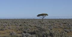 Tree in a million