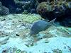Spotty Fish (Please Identify- I've forgotten!)