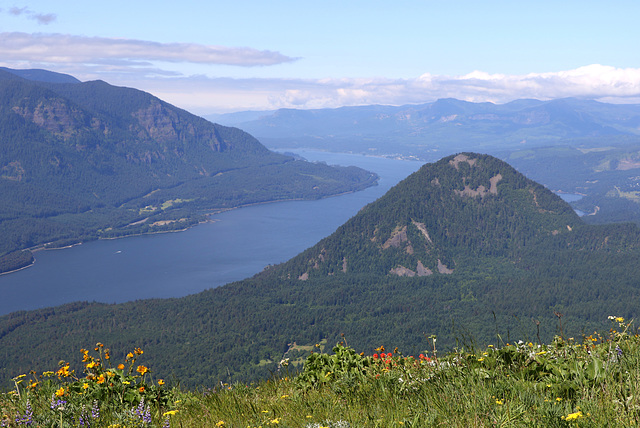 Columbia Gorge from Dog Mountain