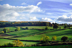 Withycombe Hill