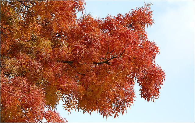 Splendeur d'automne...