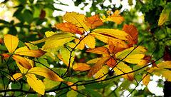 Vitrail d'automne