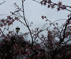 le printemps est droit devant